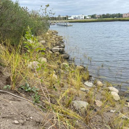 Coastal wetlands provide beautiful and functional armor to the shoreline. Such plantings can help us both adapt to and mitigate climate change.